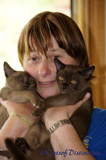 catsofdistinction.com.au - Brown Burmese Kitten: Me and my boys